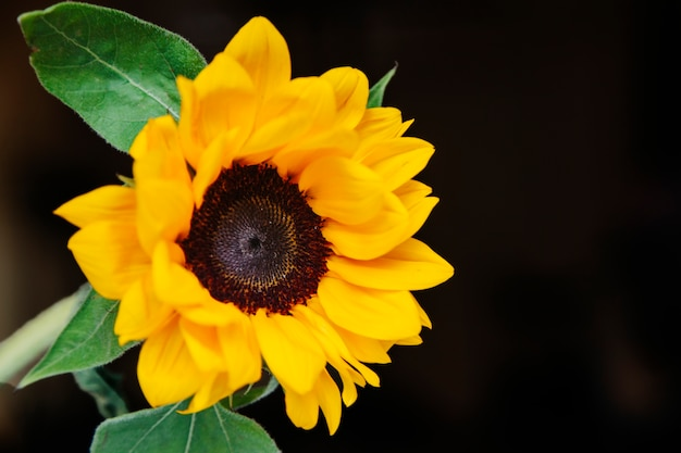 Kompozycja kwiatowa z pięknym słonecznikiem