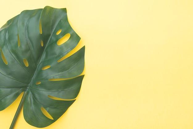 Kompozycja kwiatowa z zielonym liściem monstera na żółtym tle, widok z góry, układ z miejscem na tekst