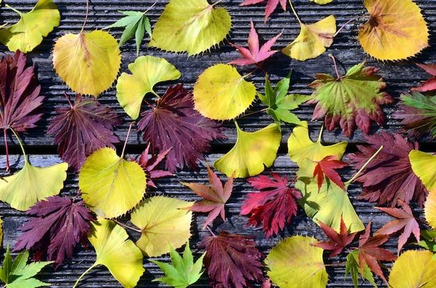 Kompozycja liści klonu, lipy i miłorzębu opadającego jesienią na ziemię
