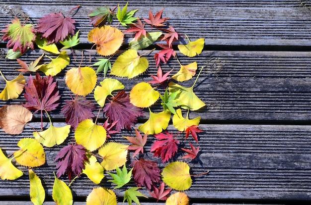 Kompozycja liści klonu, lipy i miłorzębu opadłych jesienią na ziemię z miejscem do pisania