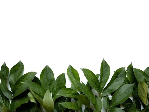 Kompozycja liści. rama wykonana z zielonych liści na białym tle. dzień ślubu, dzień matki i koncepcja dzień kobiet. płaski świeckich, widok z góry.