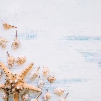 Kompozycja morska z rozgwiazdy i copyspace