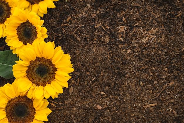 Kompozycja ogrodnicza z czterema słonecznikami i przestrzenią