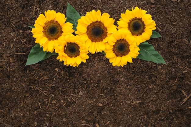 Kompozycja ogrodnicza z pięcioma słonecznikami