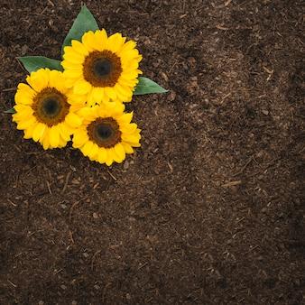 Kompozycja ogrodnicza z słonecznikami i przestrzeń na glebie