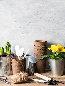 Kompozycja ogrodowa z hiacyntów i wiesiołka w doniczkach i narzędziach ogrodowych na rustykalnym stole z drewna