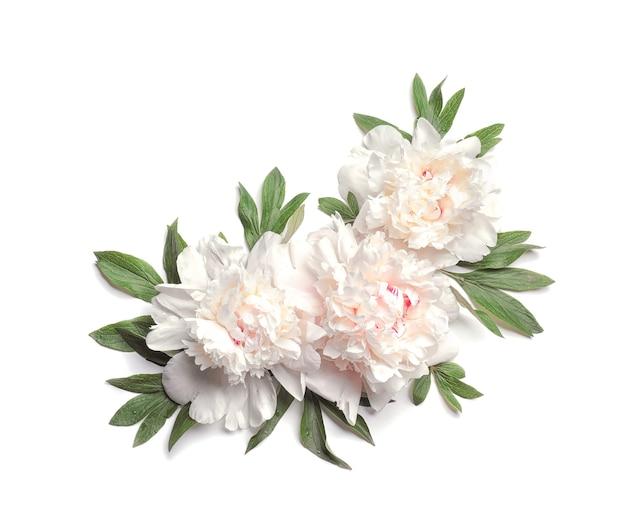 Kompozycja pięknych kwiatów piwonii na białym tle