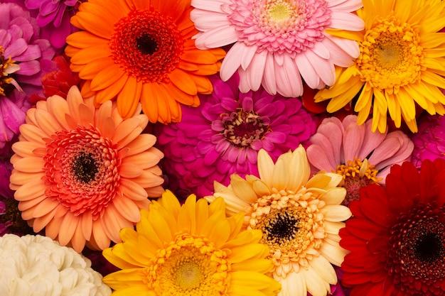 Kompozycja pięknych tapet z kwiatami