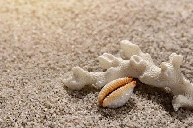 Kompozycja plaży z koralami morskimi i muszlą na czystym piasku zbliżenie tła morza i wypoczynku