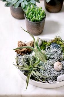 Kompozycja roślinna z powietrzem muchówki, mchem i różnymi sukulentami eonium, kaktusem w ceramicznych doniczkach stojących na białym marmurowym stole. hobby związane z pandemią, rośliny zielone, rośliny miejskie