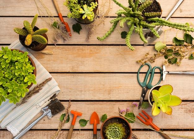 Kompozycja różnych roślin i narzędzi