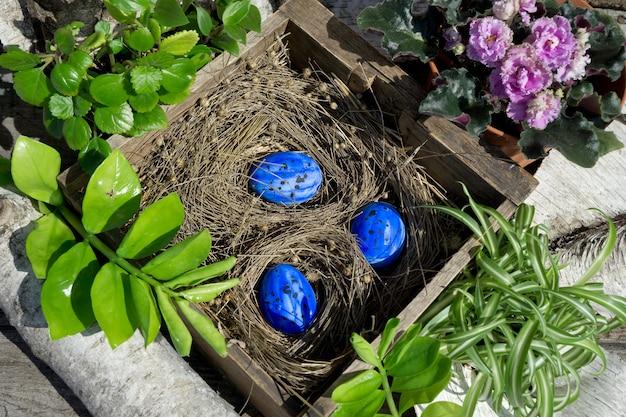 Kompozycja wielkanocna z niebieskim jajkiem w starym drewnianym pudełku z suchą rośliną jako gniazdem oraz zielonymi roślinami i kwiatem