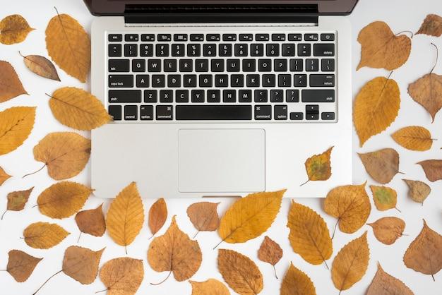 Kompozycja z jesiennych liści i laptopa