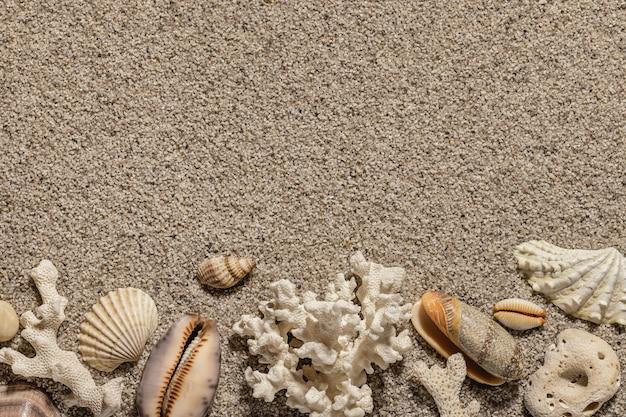Kompozycja z muszelkami i kopią miejsca na piasku na plaży morze i tło rekreacyjne