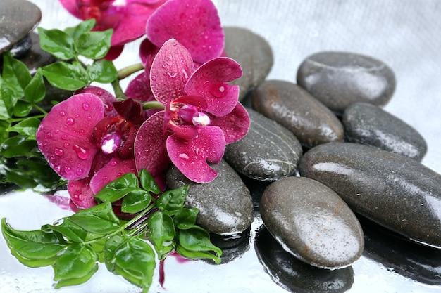 Kompozycja z pięknie kwitnącą orchideą z kroplami wody i kamieniami spa, w jasnym kolorze