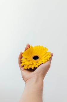 Kompozycja z pięknym kwitnącym kwiatem
