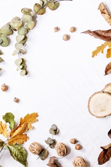 Kompozycja z żółtymi liśćmi klonu, gałęziami eukaliptusa i kasztanami na białym tle. leżał płasko, kopia przestrzeń
