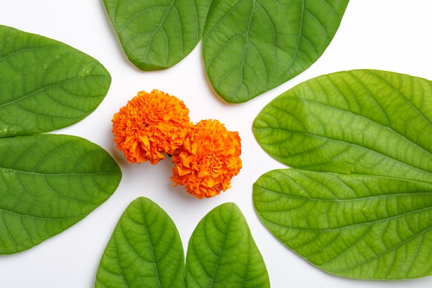 Kompozycja zielonych liści i ryżu na indyjski festiwal duserae