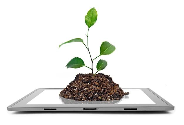 Komputer typu tablet na białym tle na białych powierzchniach. drzewo