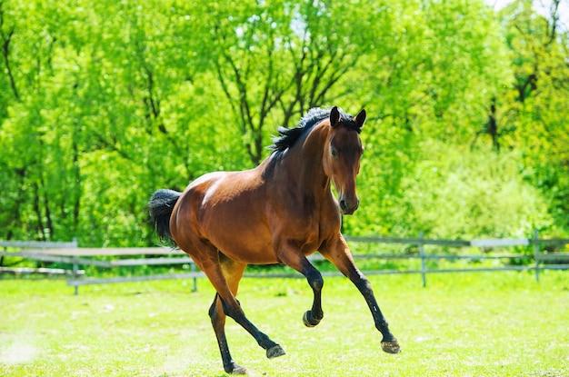 Koń biegnie w trawie