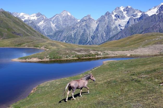 Koń chodzenie po trawie w pobliżu jeziora z górami