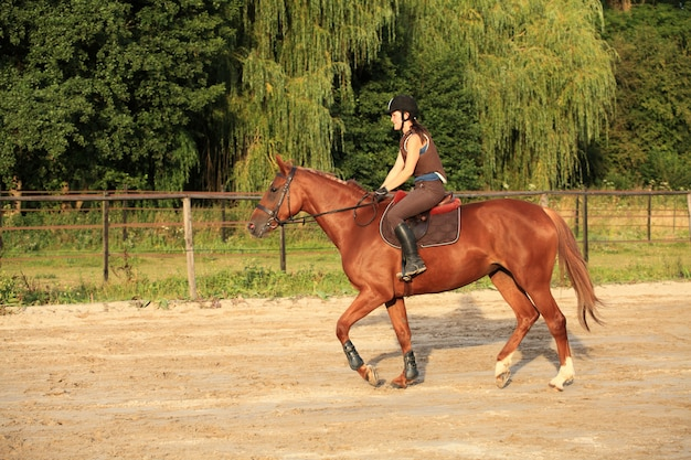 Koń i jeździec
