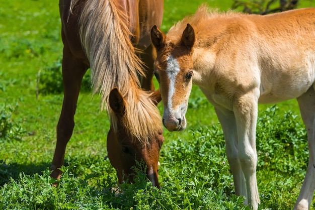 Koń i źrebię na wypasie