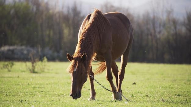 Koń, który świetnie wygląda w naturze.