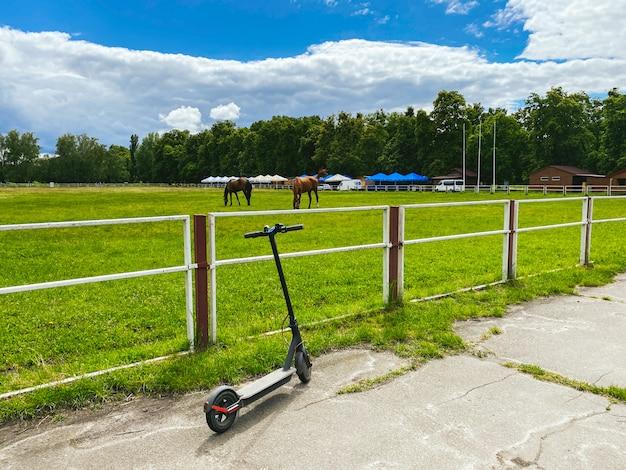 Koń na arenie. na straganie jest piękny biały koń.