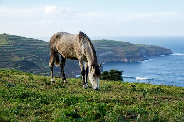 Koń na brzegu oceanu.