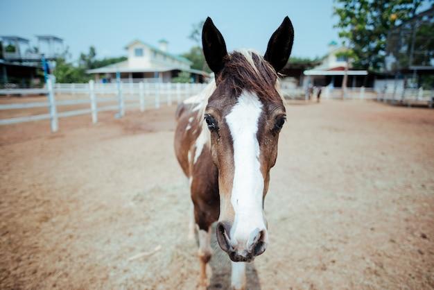 Koń na farmie koni