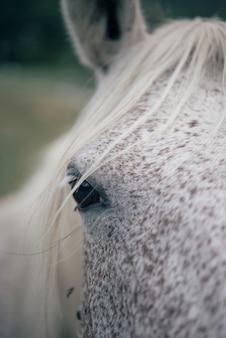 Koń na naturze. portret konia
