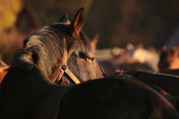Koń na pastwisku o zmierzchu