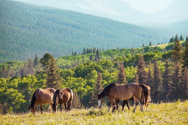 Koń na pastwisku w chile, ameryka południowa