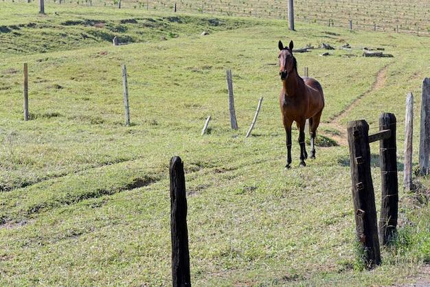 Koń na pastwisku z zieloną trawą i drzewami