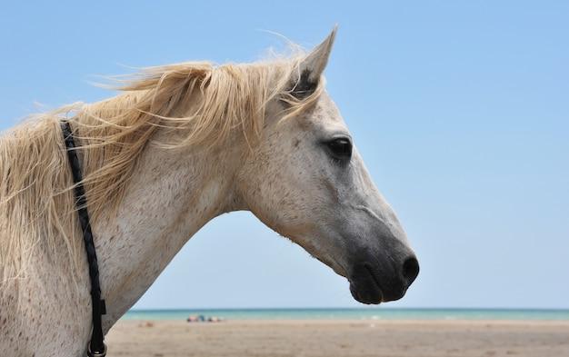 Koń na plaży