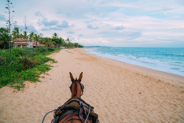 Koń na tropikalnej plaży z białym piaskiem