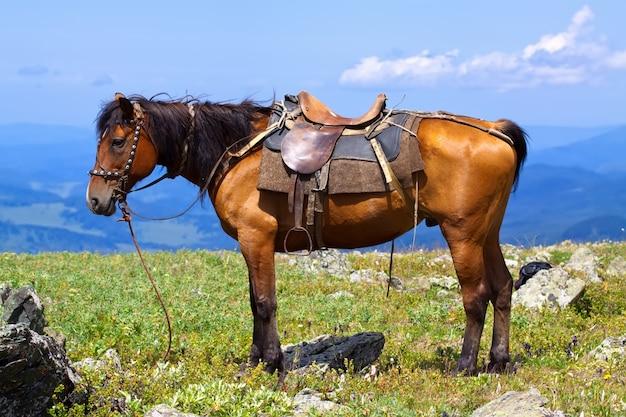 Koń siodłowy