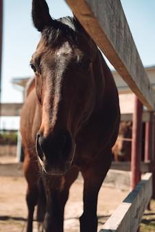 Koń stoi na zewnątrz. patrząc na bok.