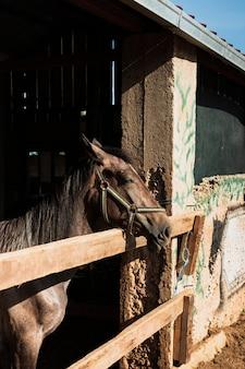 Koń stojący z głową na zewnątrz stajni