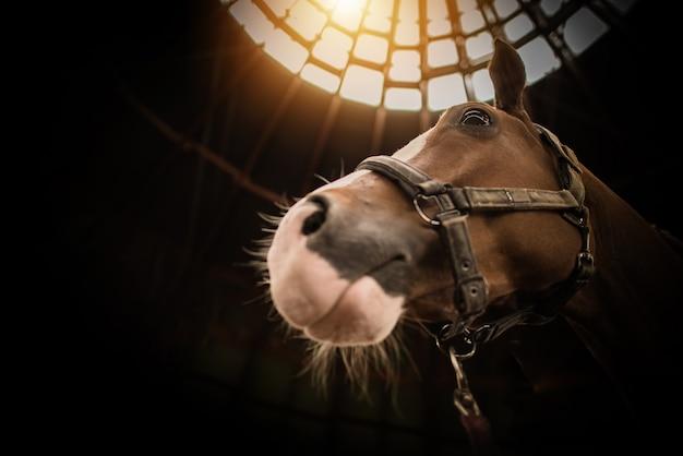 Koń w ciemnej stodole z nieboskłonowym elementem dachu.