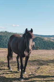 Koń w górach