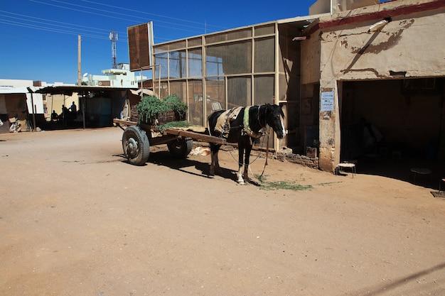 Koń w karmie, sudan, afryka