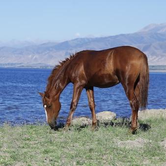 Koń w pobliżu górskiego jeziora