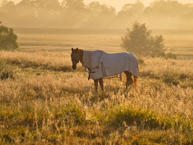 Koń w ubraniu stojący w polu otoczonym zielenią w świetle słonecznym