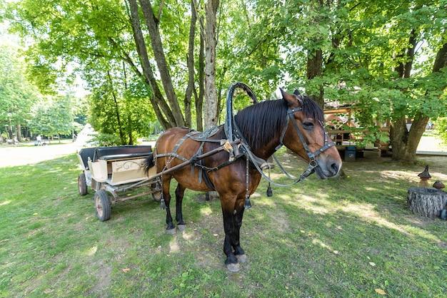 Koń zaprzęgnięty latem do wozu