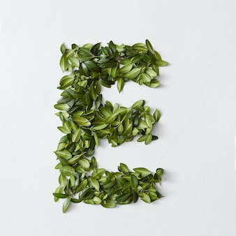 Koncepcja alfabetu angielskiego. alfabet na białym tle. litery abc z zielonych liści. litera e reprezentowana przez zielone liście. symbol e na białym tle.
