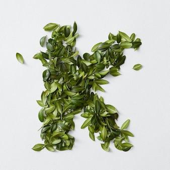 Koncepcja alfabetu angielskiego. alfabet na białym tle. litery abc z zielonych liści. litera k reprezentowana przez zielone liście. symbol k na białym tle.