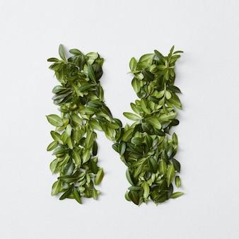 Koncepcja alfabetu angielskiego. alfabet na białym tle. litery abc z zielonych liści. litera n reprezentowana przez zielone liście. symbol n na białym tle.