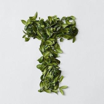 Koncepcja alfabetu angielskiego. alfabet na białym tle. litery abc z zielonych liści. litera t reprezentowana przez zielone liście. symbol t na białym tle.